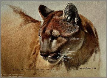 John Seerey-Lester - Cougar Head Study