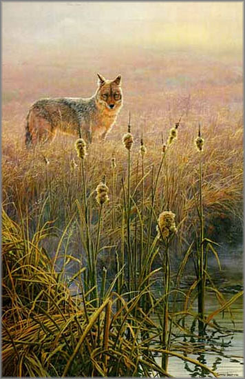 John Seerey-Lester - Dawn on the Marsh - Coyote
