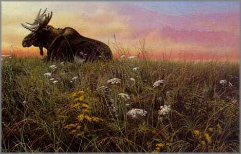 John Seerey-Lester - Daybreak - Moose