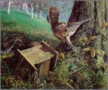 John Seerey-Lester - Early Windfall - Gray Squirrels