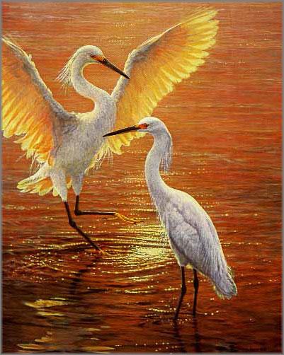John Seerey-Lester - Evening Duet - Snowy Egrets
