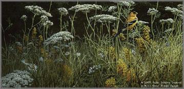 John Seerey-Lester - Evening Meadow - American Goldfinch