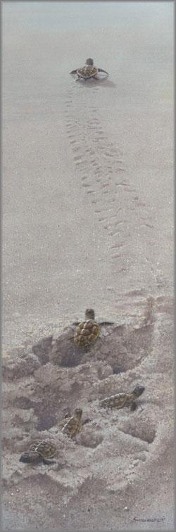 John Seerey-Lester - Finding the Way-Turtle Hatchlings