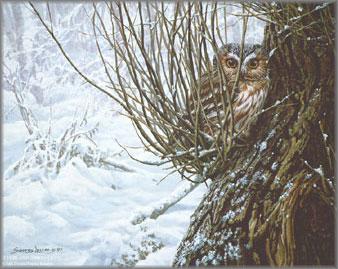 John Seerey-Lester - Hiding Place - Saw-Whet Owl