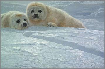 John Seerey-Lester - Ice Companions-Harp Seal Pups