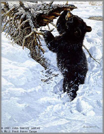 John Seerey-Lester - In Deep - Black Bear Cub