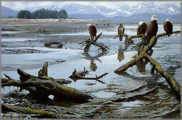 John Seerey-Lester - Low Tide - Bald Eagles
