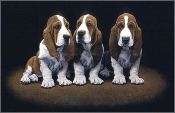 Bassett Hound Pups by John Weiss