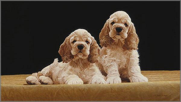 John Weiss - Cocker Spaniel Pups