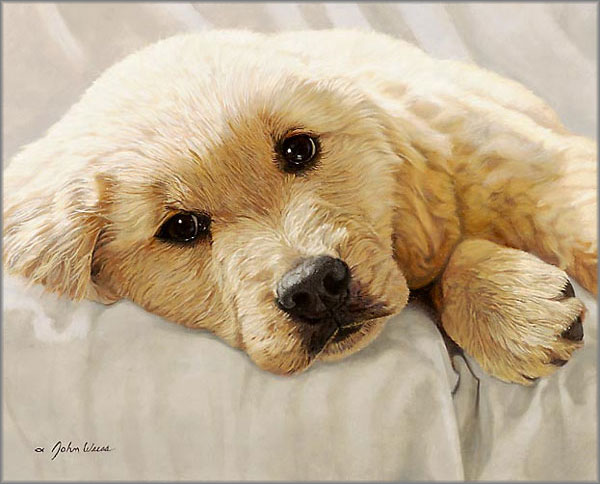 John Weiss - Best Loved Breeds: Golden Retriever Pup