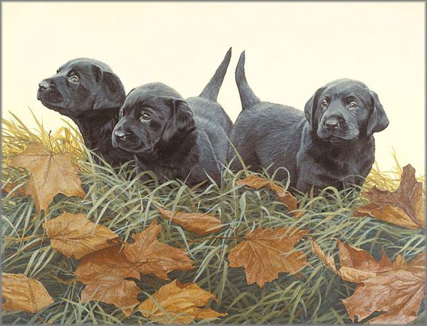 John Weiss - Lab Puppies