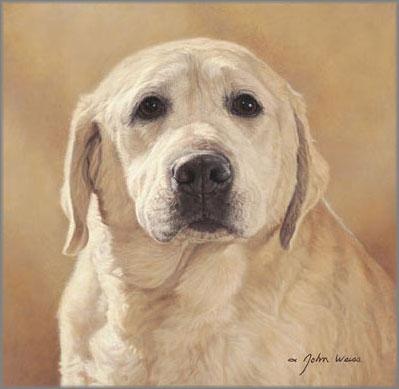 John Weiss - Maggie: Portrait of a Friend