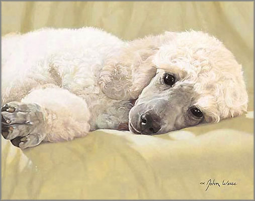 John Weiss - Best Loved Breeds: White Standard Poodle