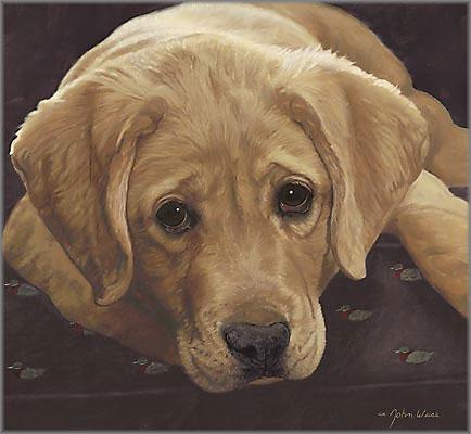 John Weiss - Best Loved Breeds: Yellow Labrador Retriever