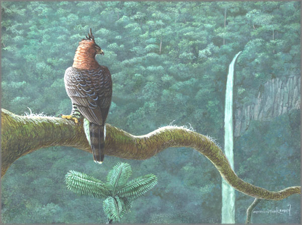 Carel Brest van Kempen - Ornate Hawk Eagle Portrait