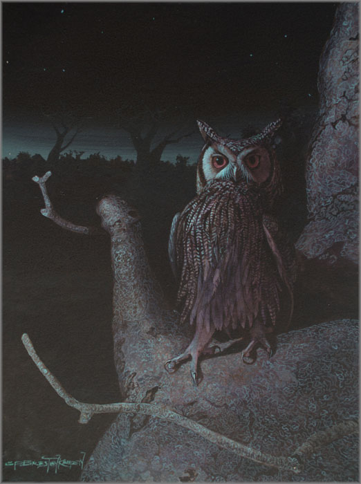 Carel Brest van Kempen - Northern White-faced Owl