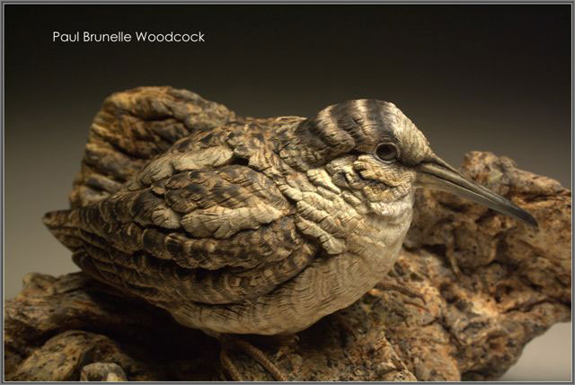 Paul Brunelle - American Woodcock